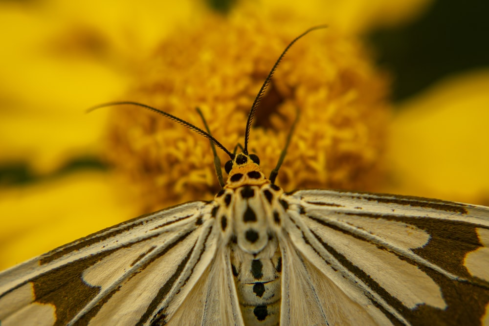white and black butterfly perched on yellow flower