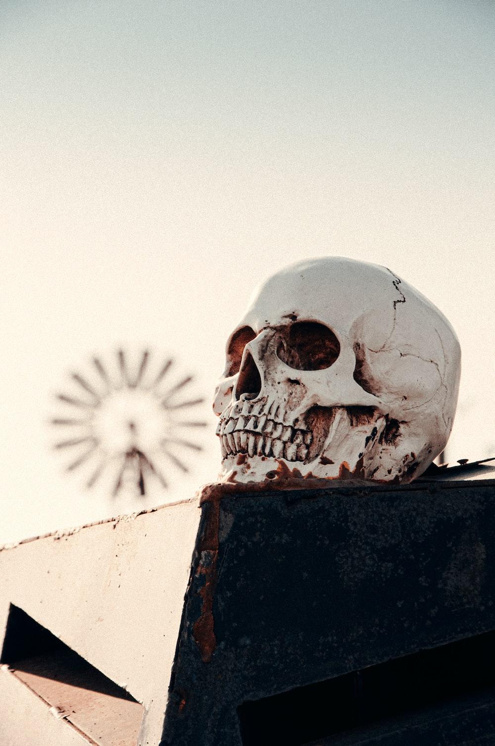 white skull on black concrete wall