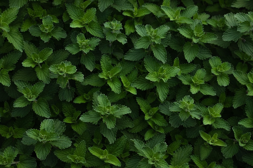 green leaves plant during daytime