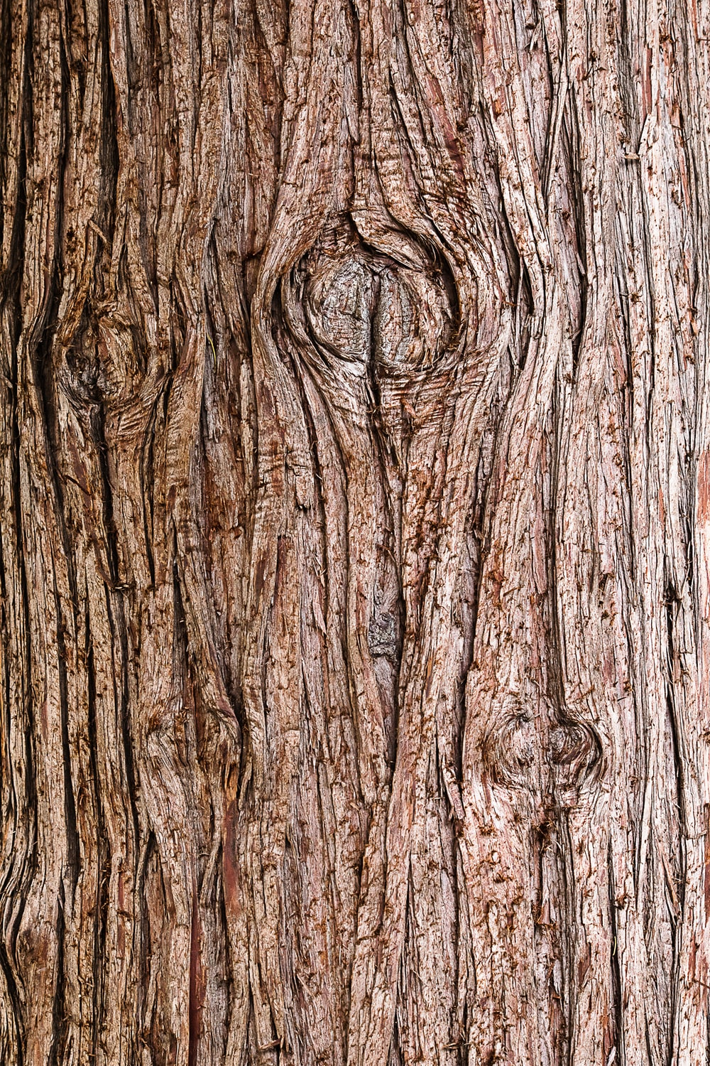 brown tree trunk in close up photography