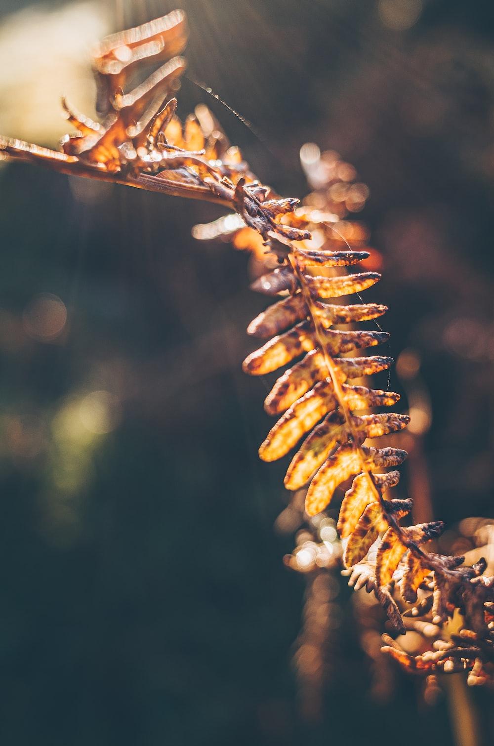 brown plant stem in tilt shift lens