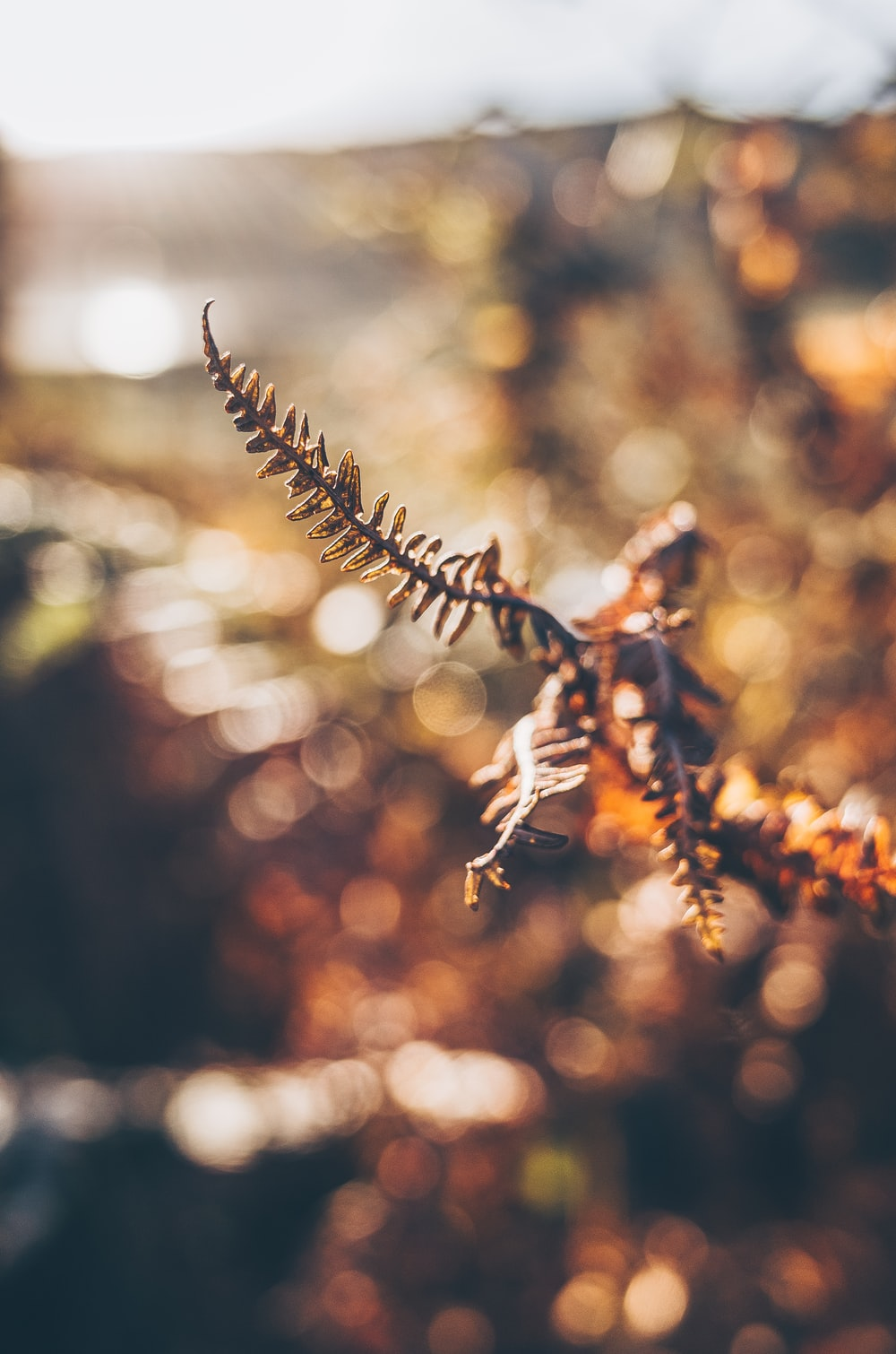 brown plant in tilt shift lens