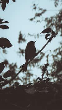 The Little Songbirds stories