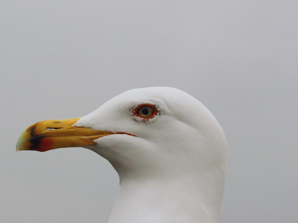 white bird with yellow beak