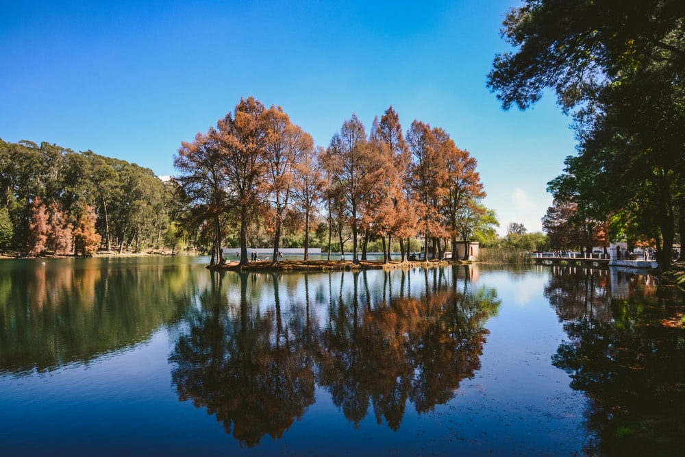 brown trees beside body of water during daytime