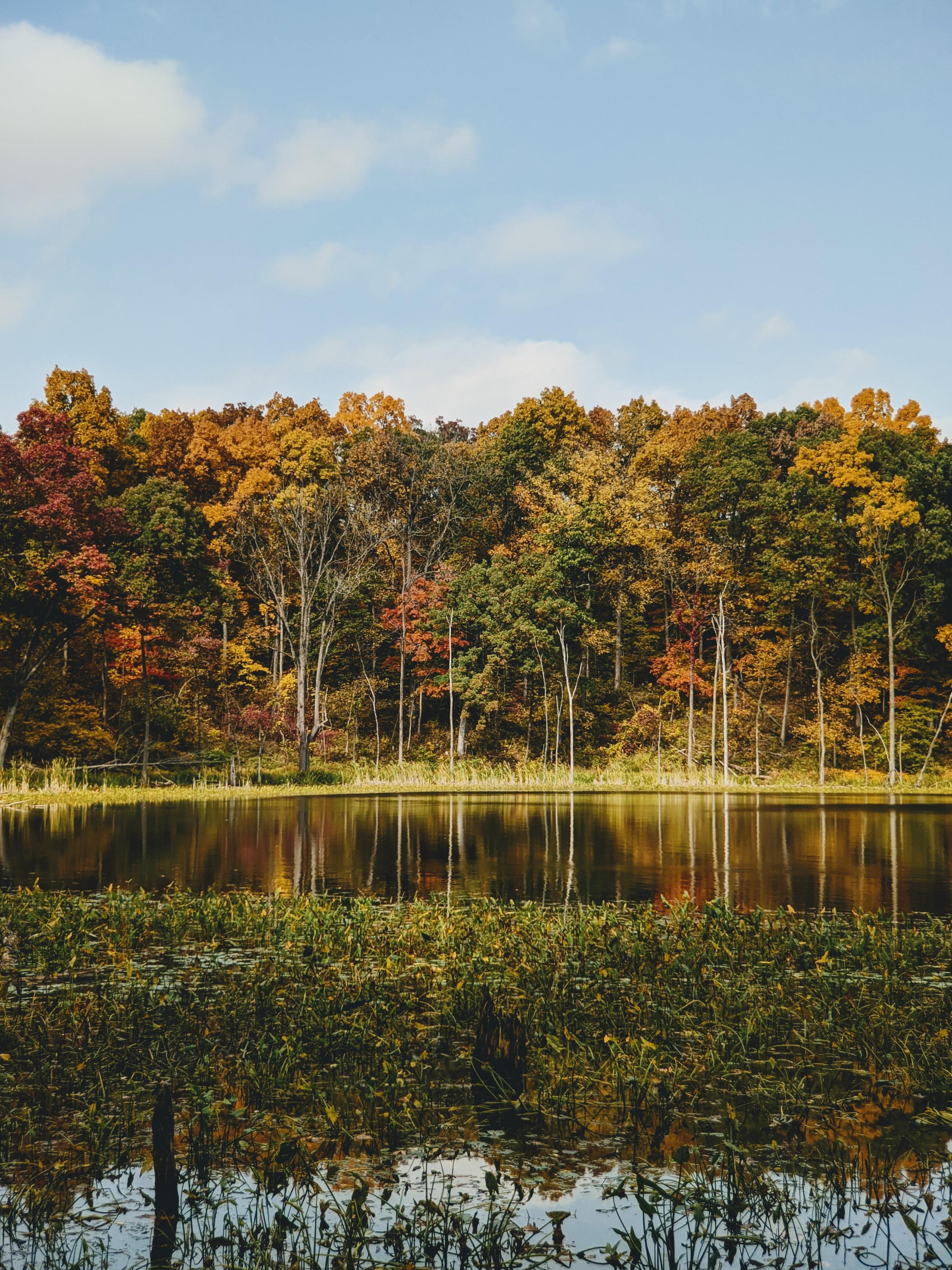 Autumn woods in Indiana