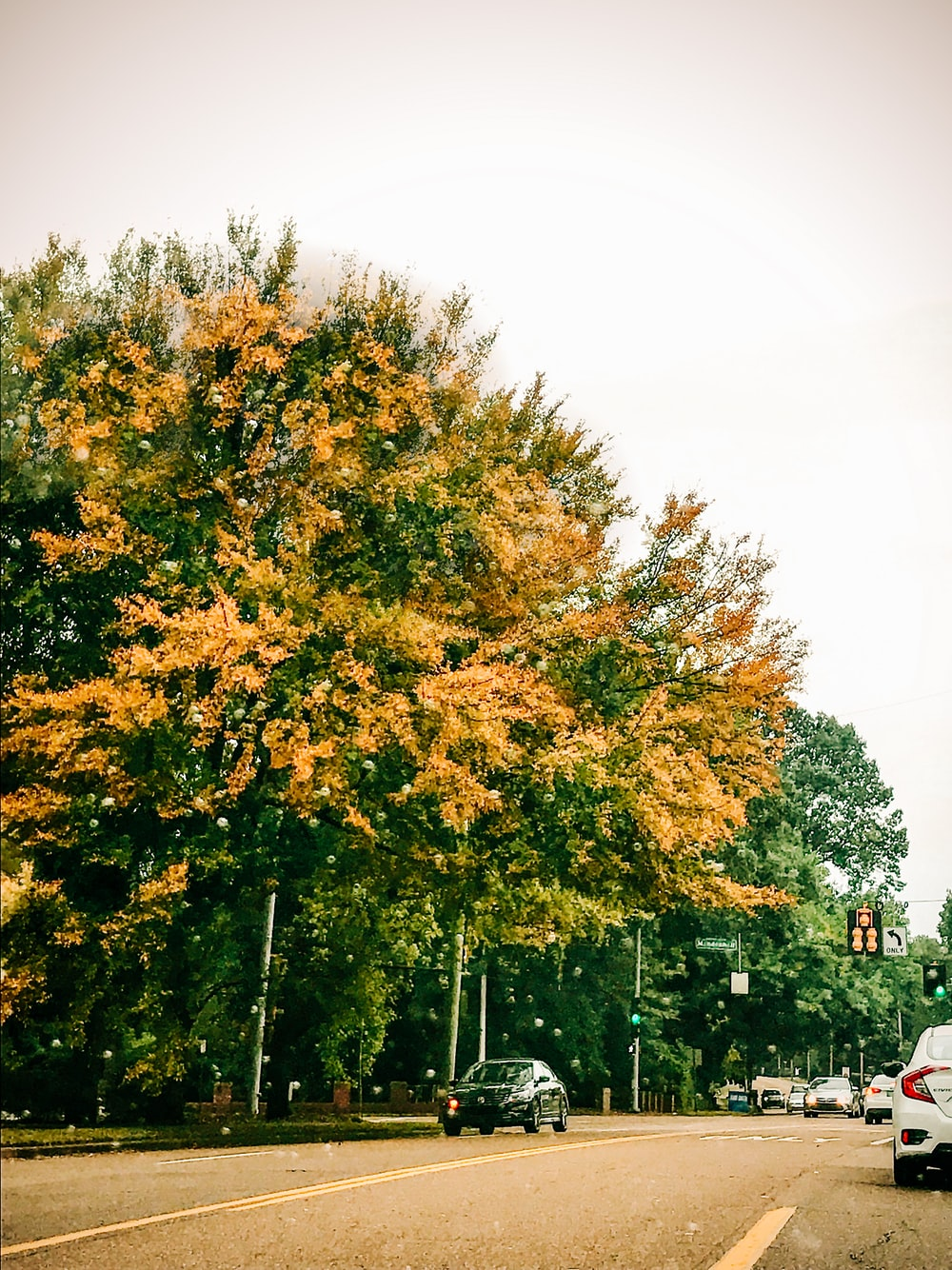 green and yellow trees near cars on road during daytime