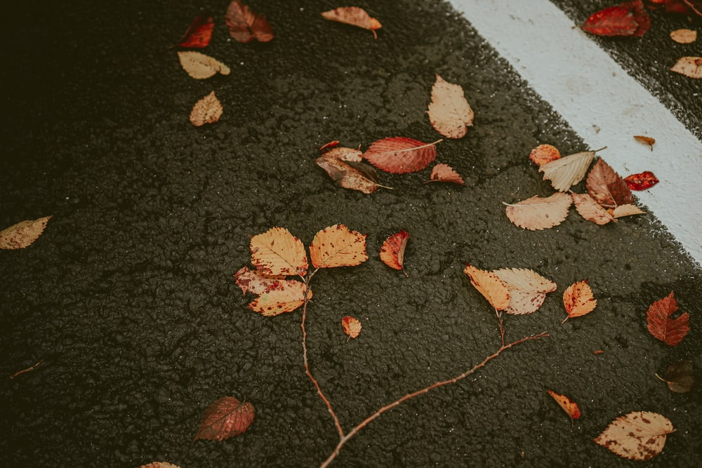 red and brown leaves on black concrete floor