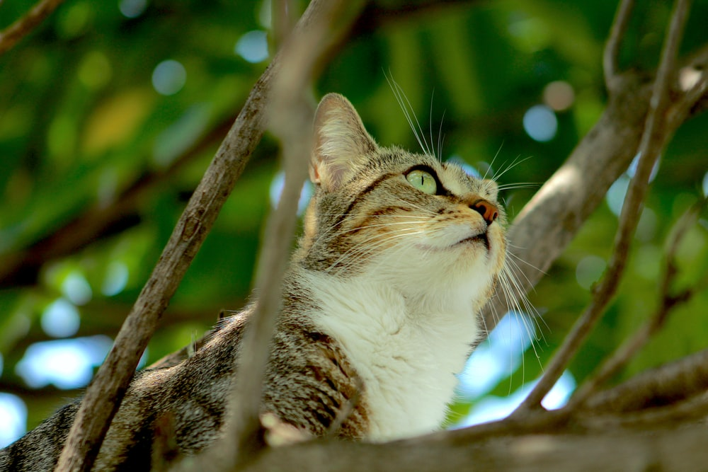 white and brown tabby cat on tree branch