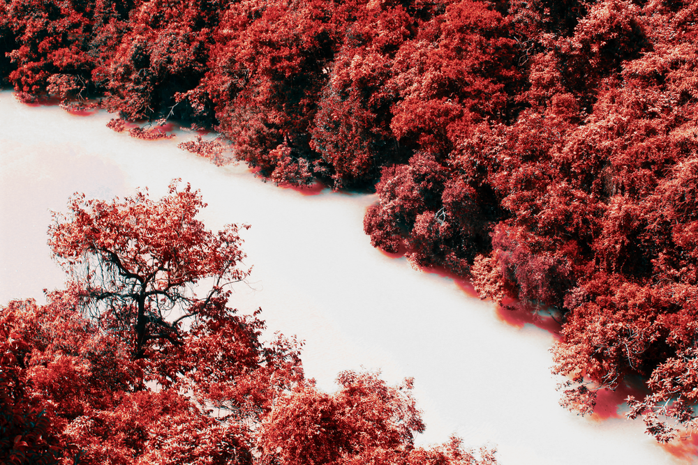 red and brown trees on brown sand