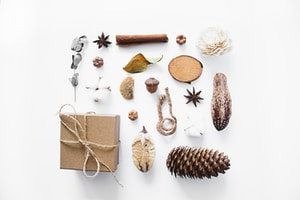 brown pine cone and pine cones