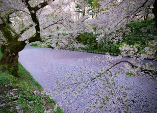 gray concrete pathway between green grass and trees