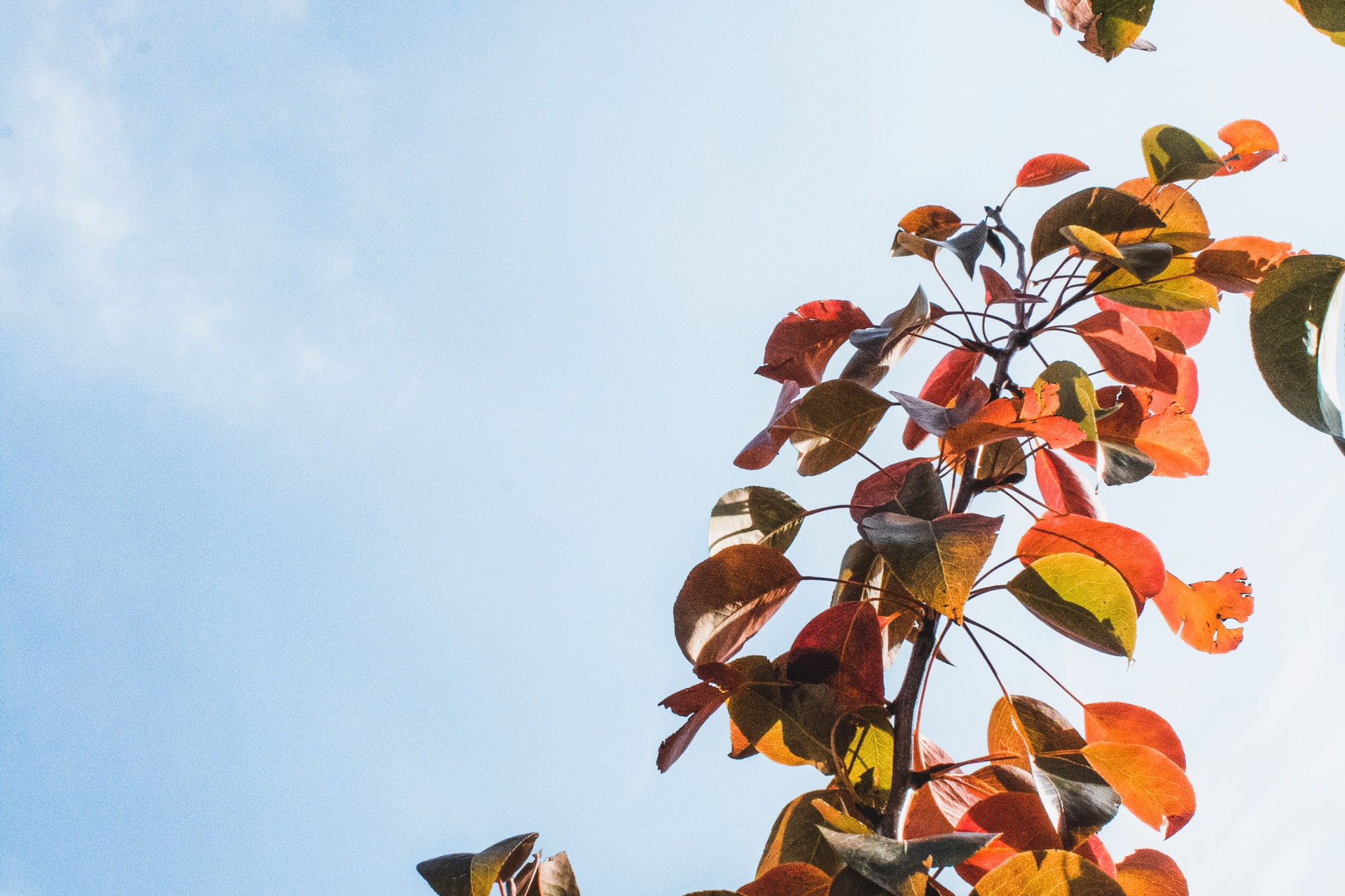 red and yellow leaves on tree branch under white clouds and blue sky during daytime