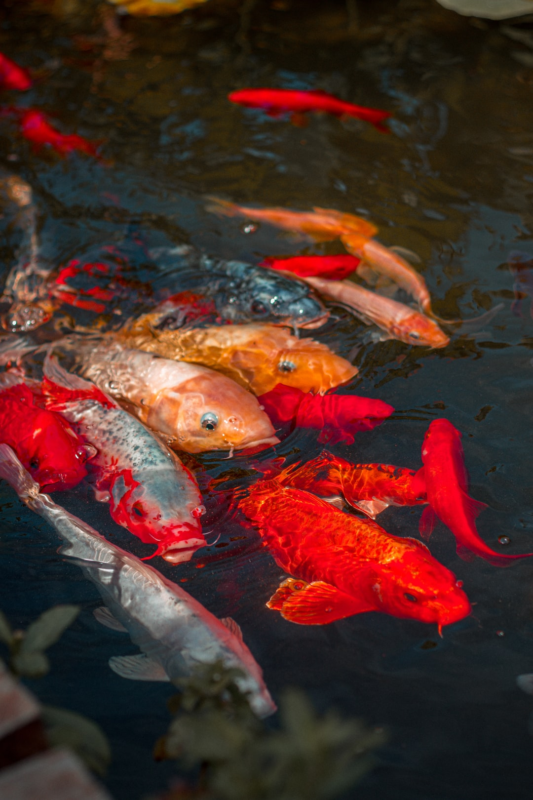 Merawat Ikan Di Dalam Akuarium Dengan Benar