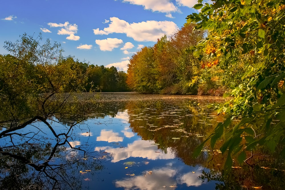 green and brown trees beside river under blue sky and white clouds during daytime