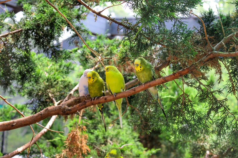 two yellow and green birds on brown tree branch during daytime