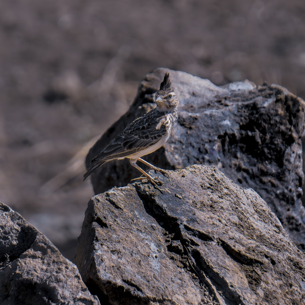 brown and white bird on brown rock
