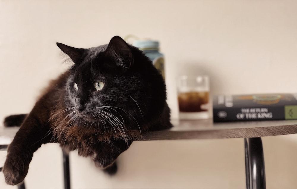 black cat on white table
