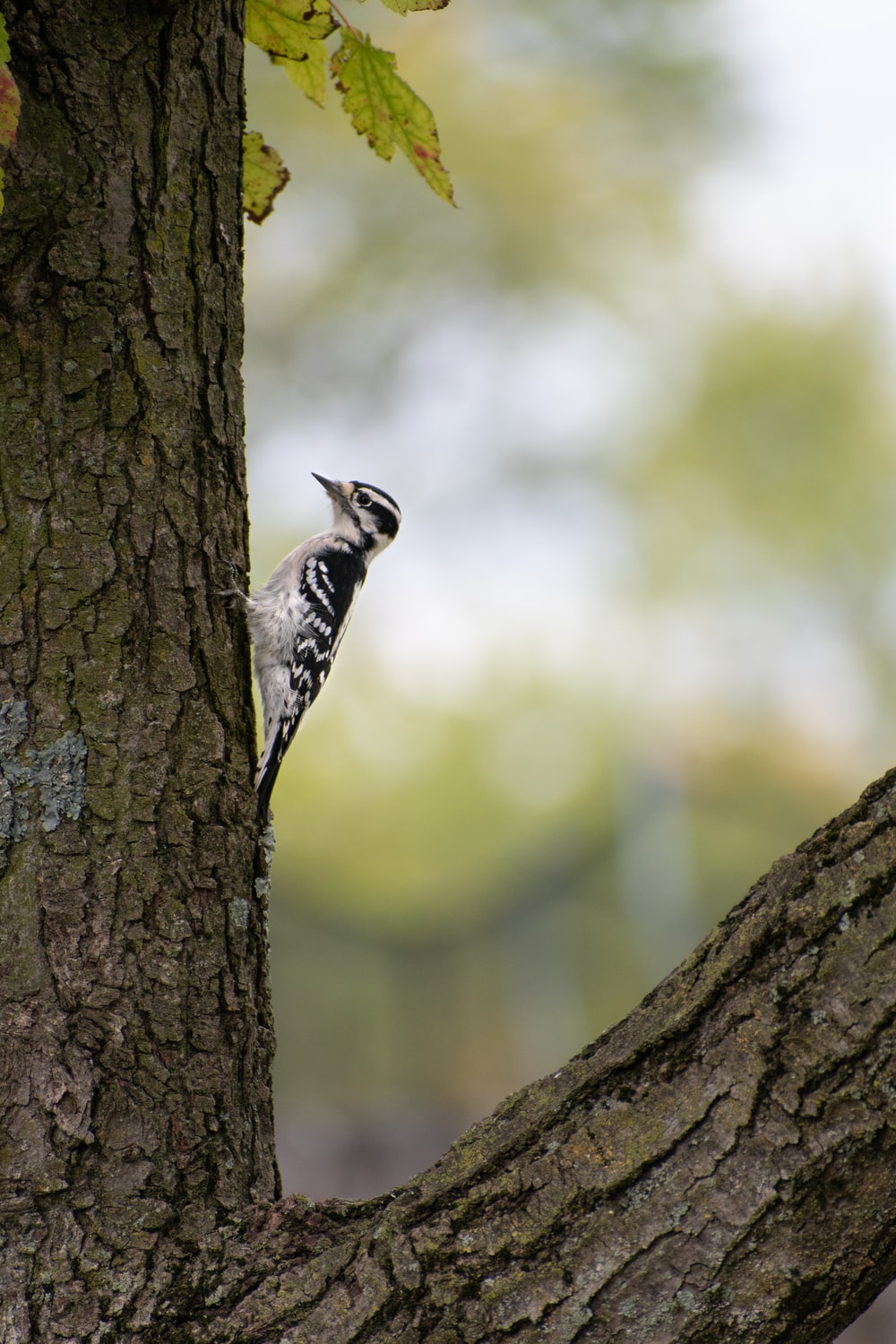 black and white bird on brown tree trunk
