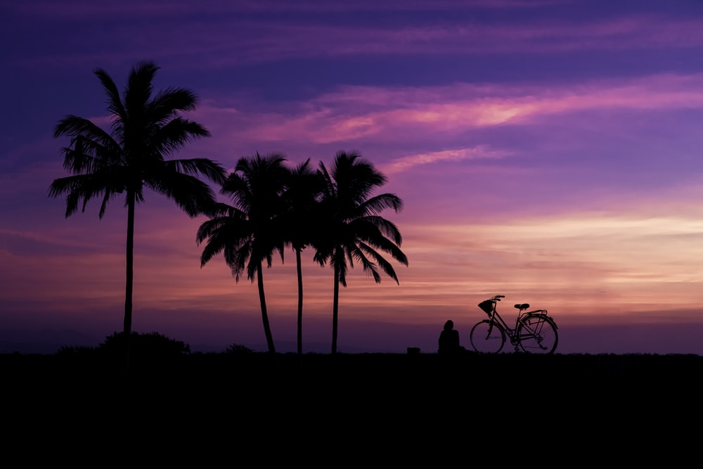 silhouette of palm tree during sunset