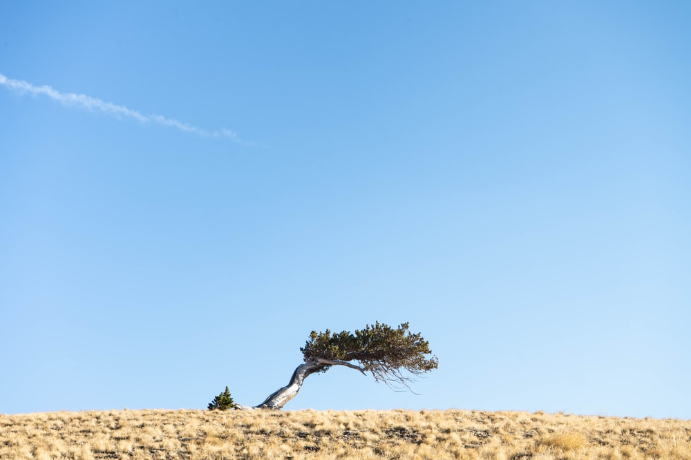 green tree on brown sand under blue sky during daytime