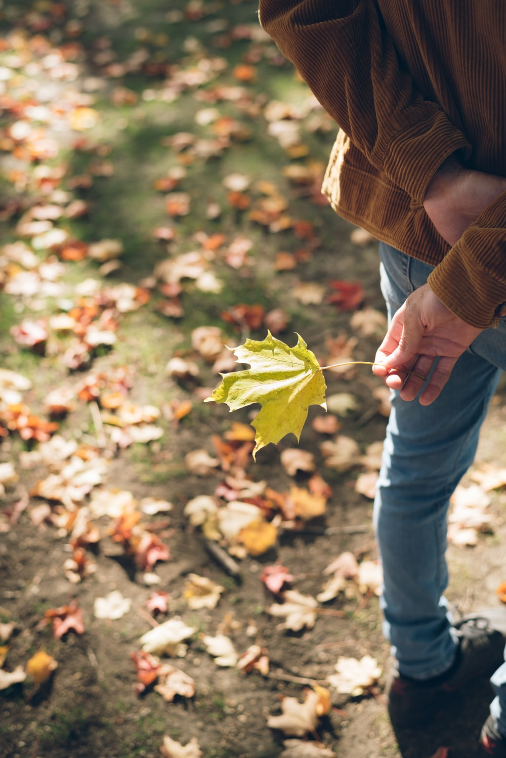 person in brown jacket and blue denim jeans holding green maple leaf