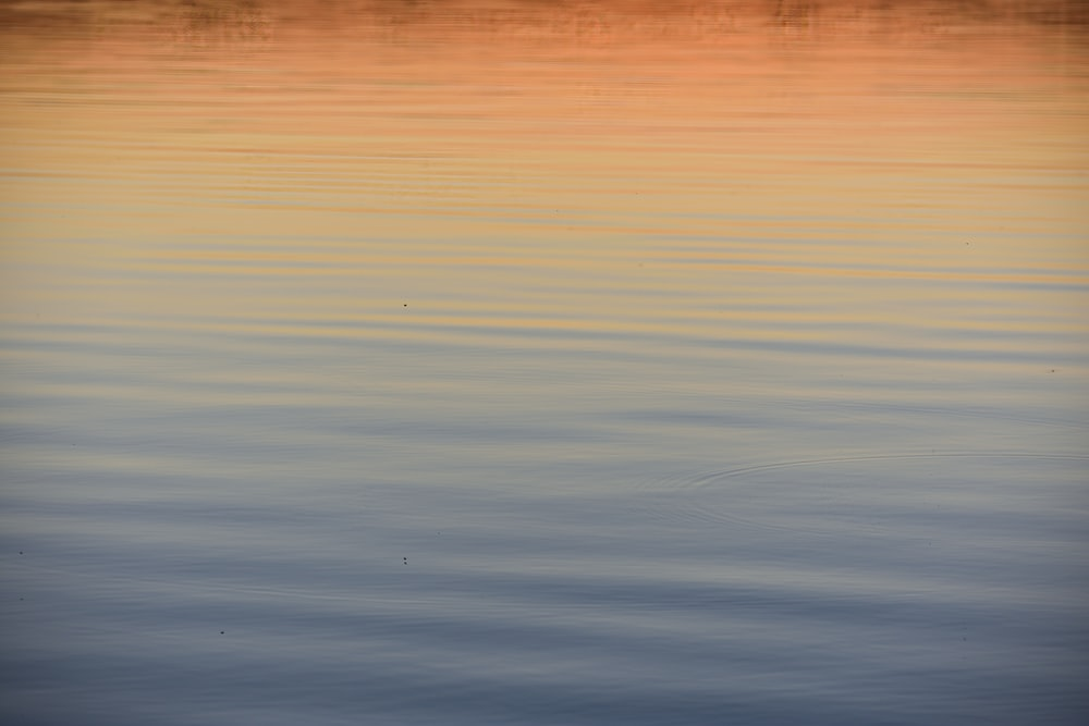 calm water during golden hour