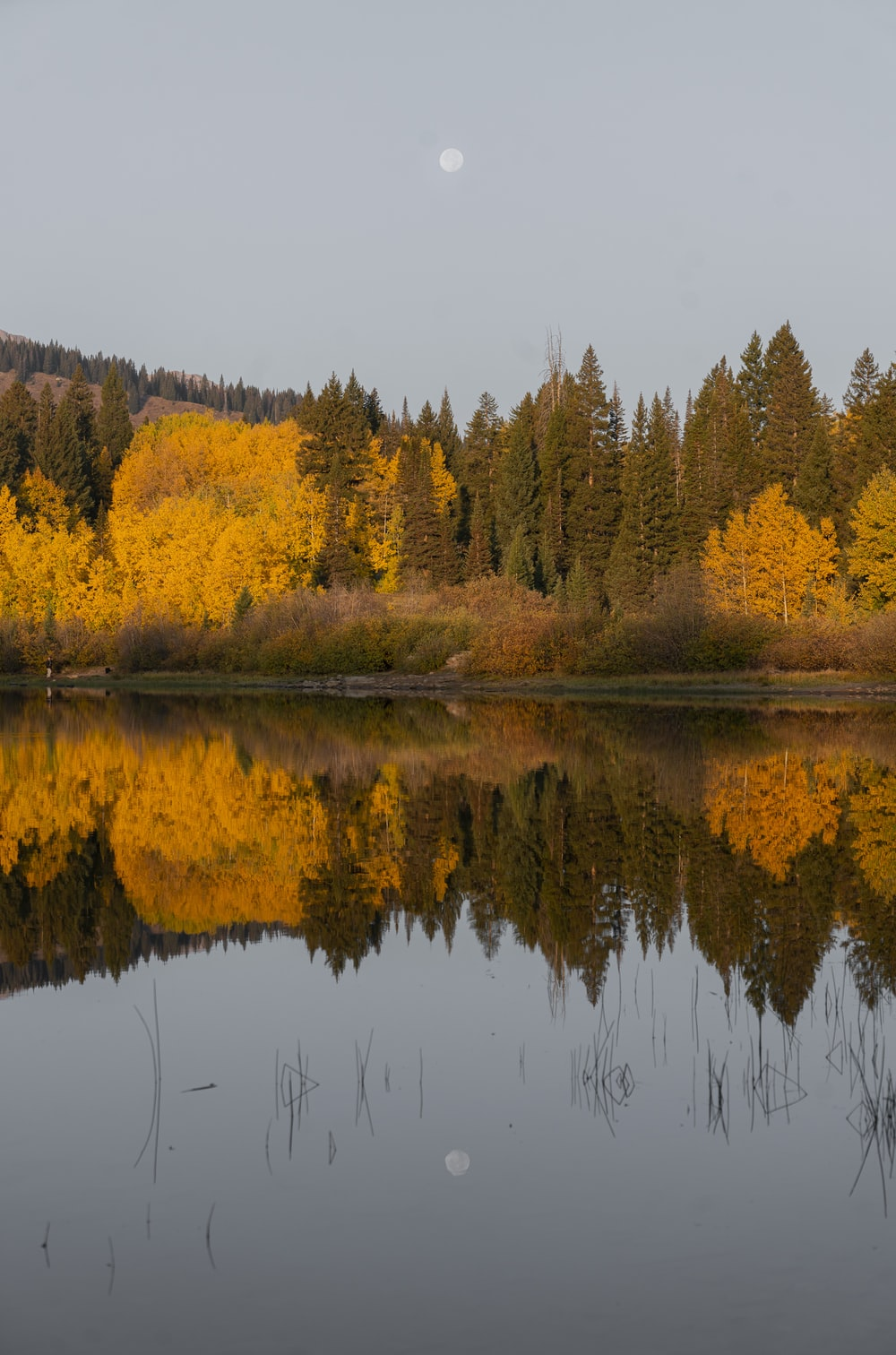 yellow and green trees beside lake during daytime