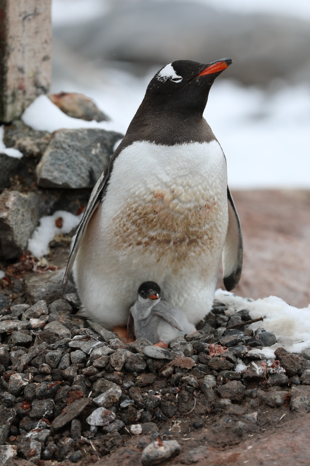 penguin on gray rocky ground during daytime