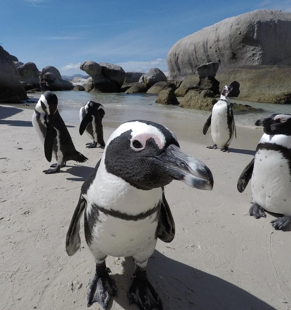 penguins on white sand during daytime