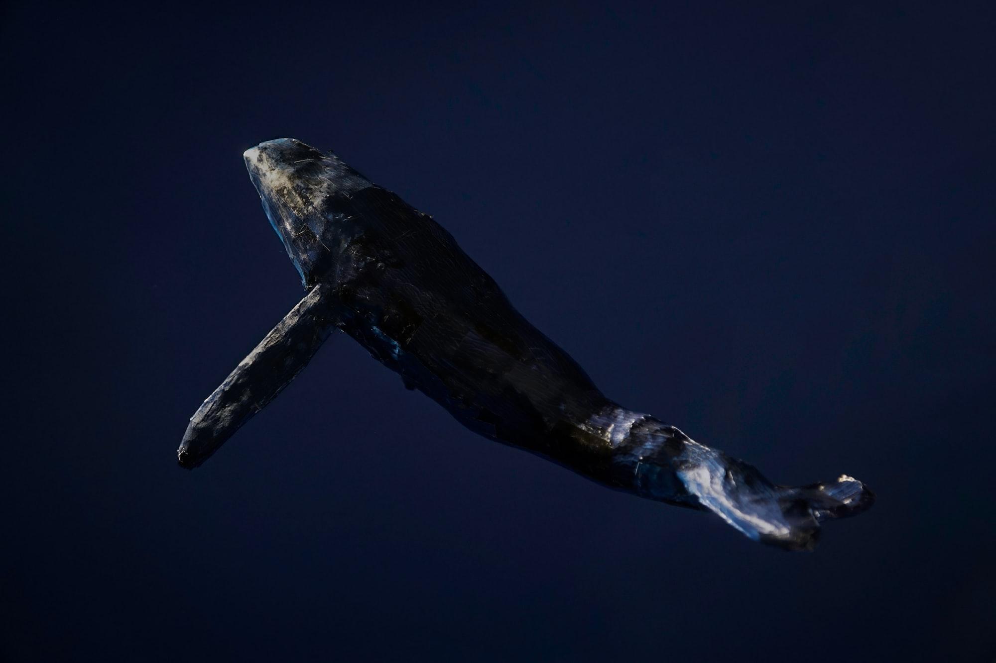 เดือนนี้เหล่าวาฬเทขาย Bitcoin ไปถึง 1.4 แสนเหรียญ