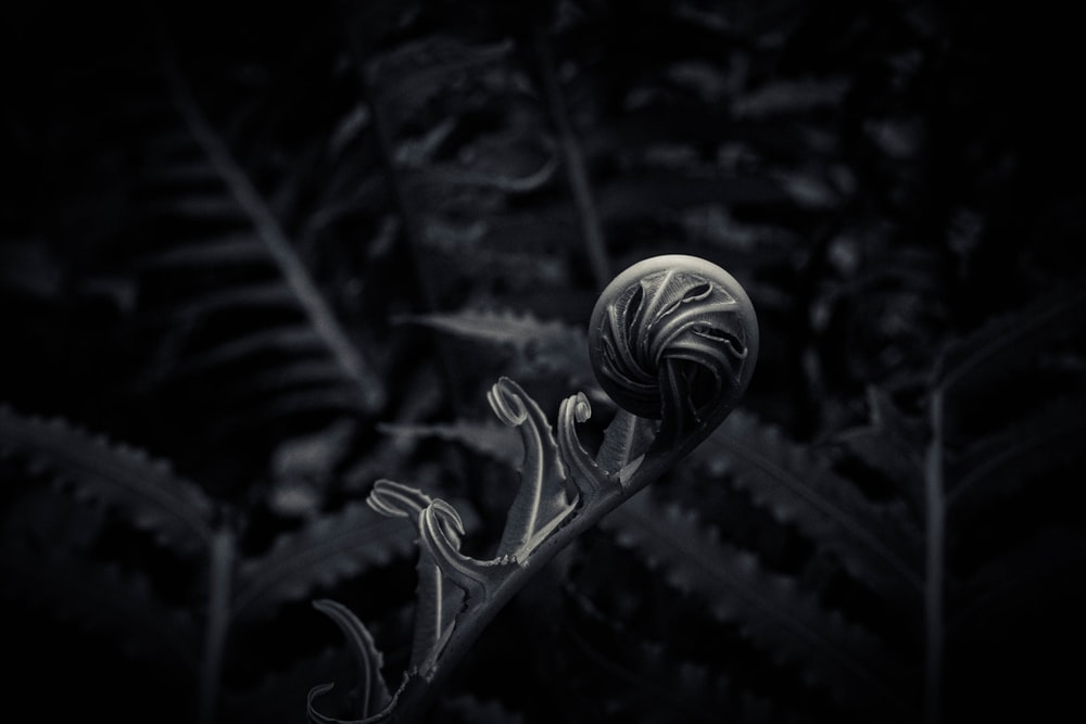 grayscale photo of flower bud