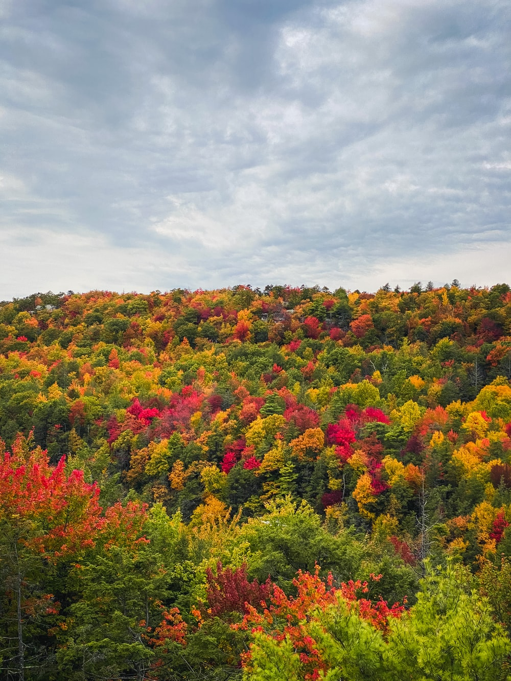 red yellow and green trees under white clouds during daytime