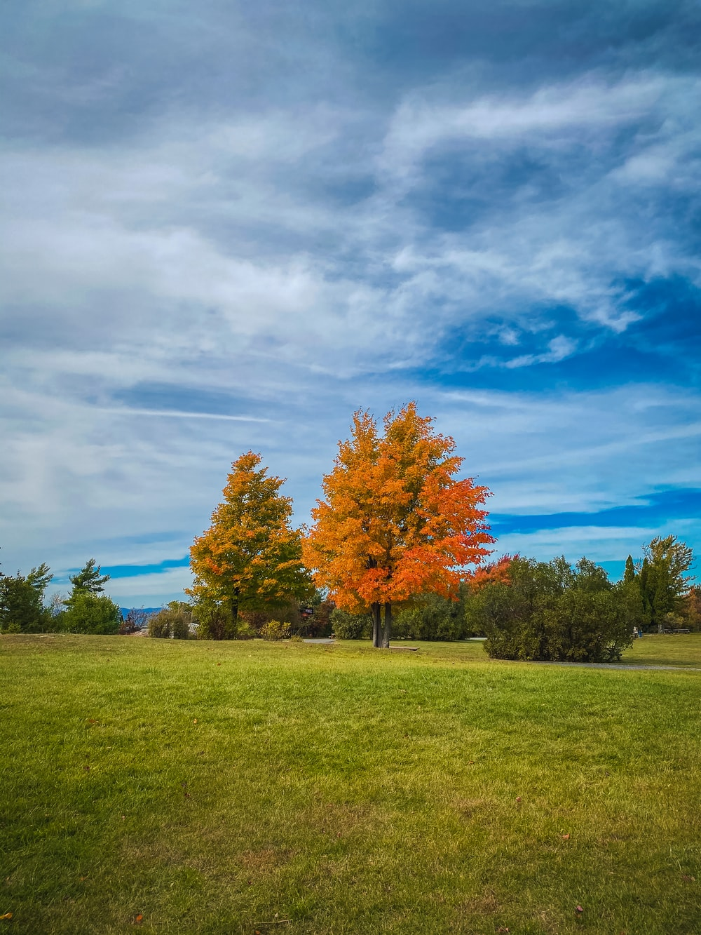 green and brown trees on green grass field under blue sky and white clouds during daytime