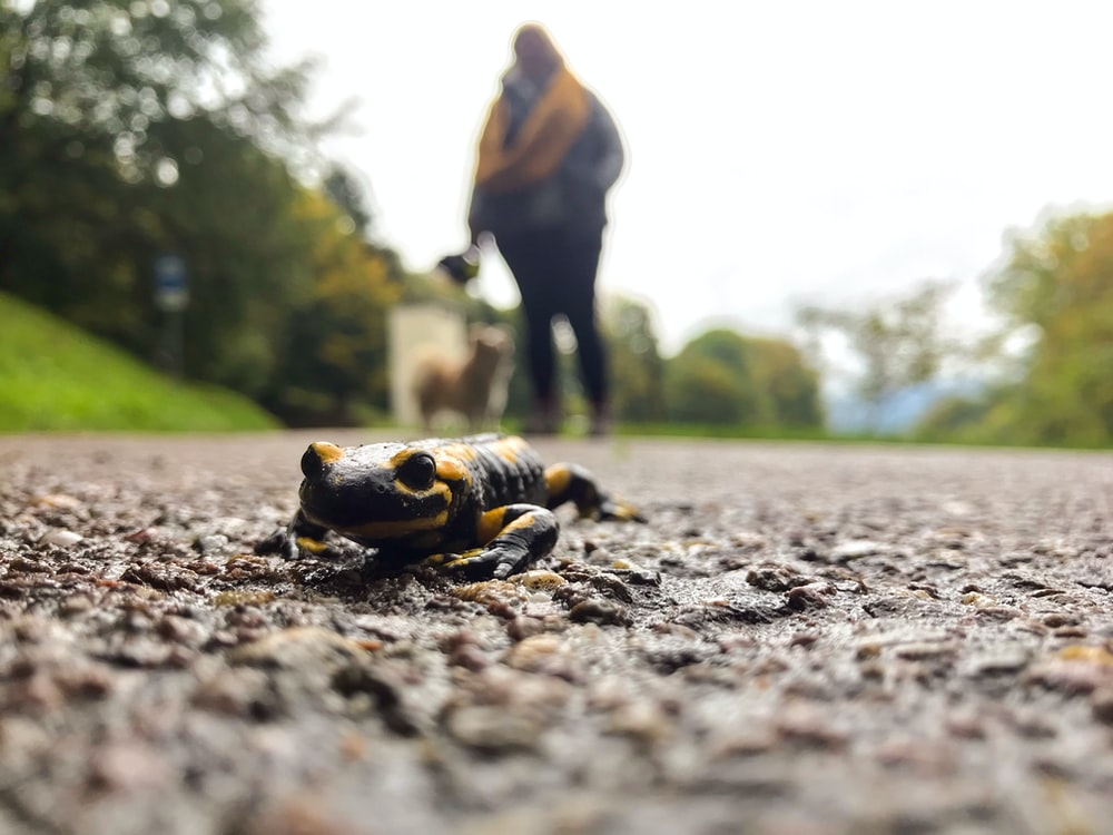 black and yellow frog on ground during daytime