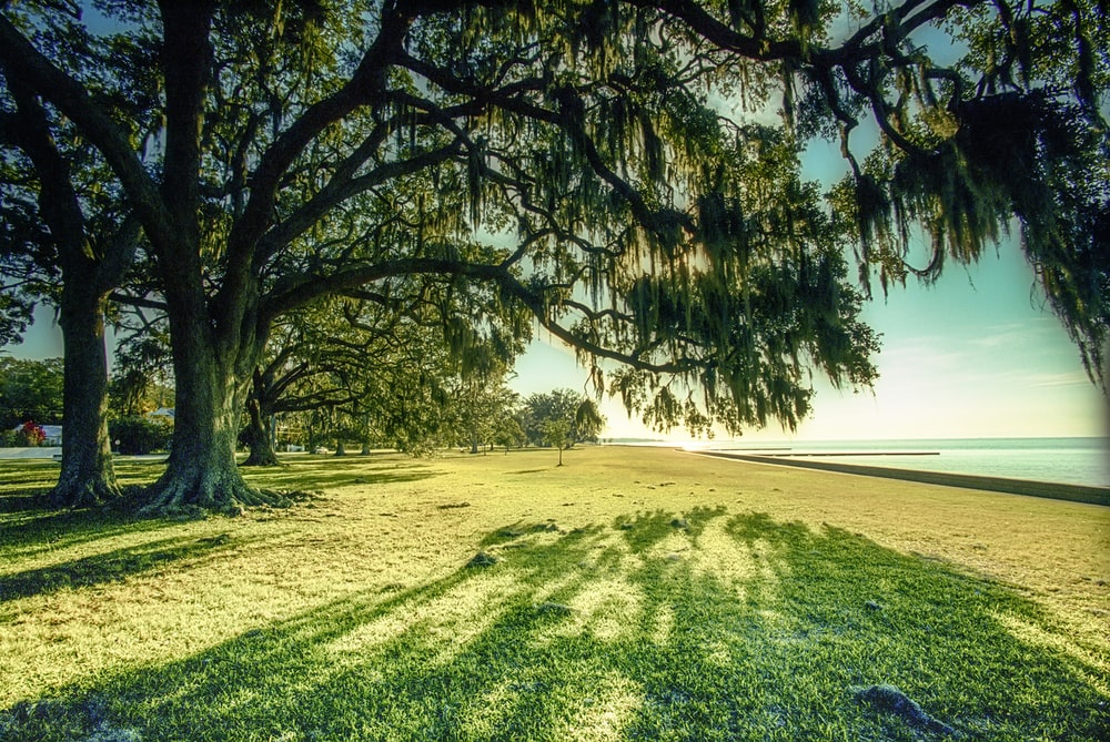 green grass field near body of water during daytime