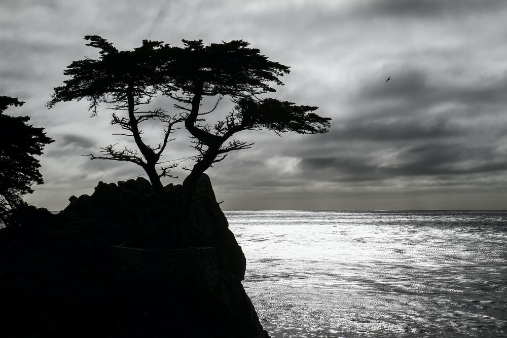 brown tree on brown rock formation near sea during daytime