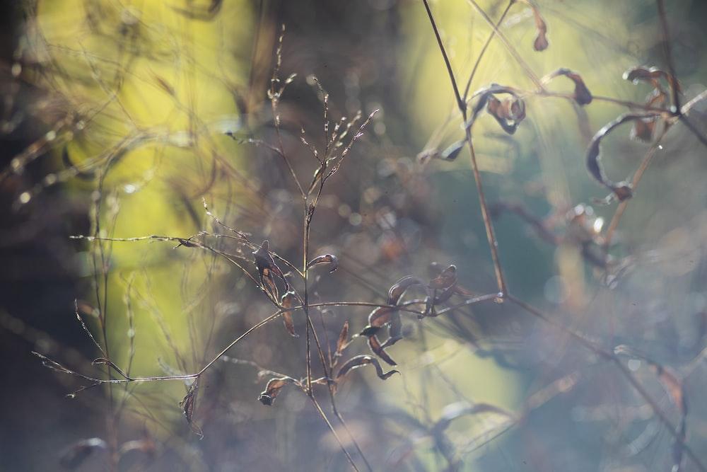 water droplets on brown stem