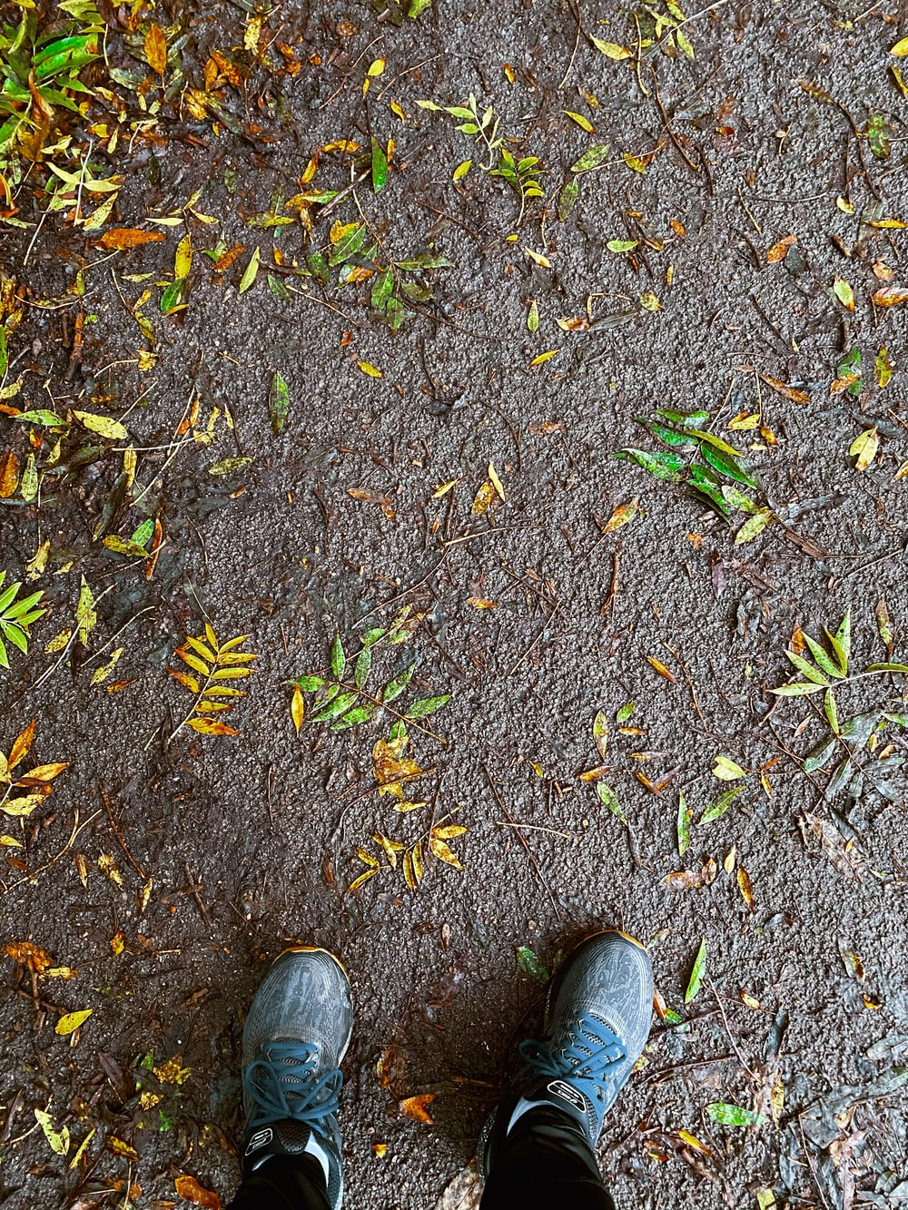 person wearing gray shoes standing on brown dried leaves