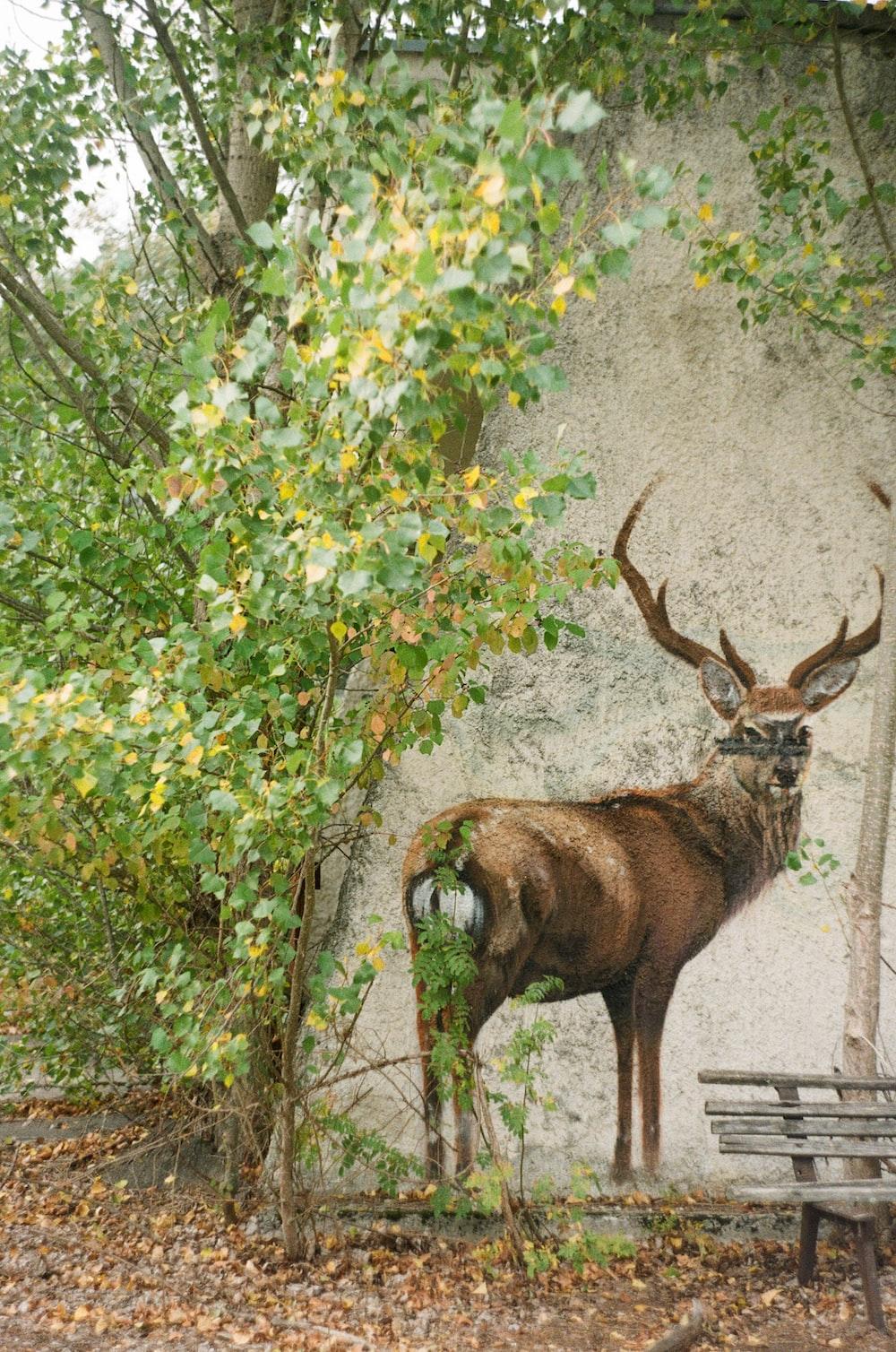 brown deer standing on gray concrete floor during daytime