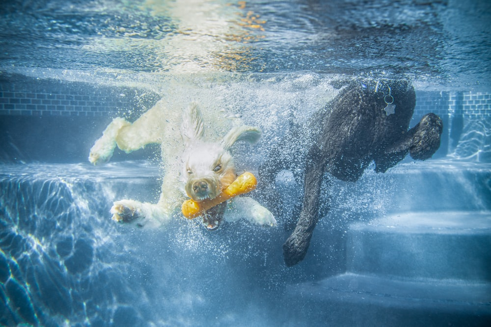 white horse in water during daytime