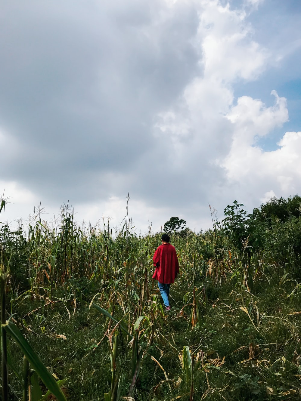 person in red jacket walking on green grass field under white clouds during daytime
