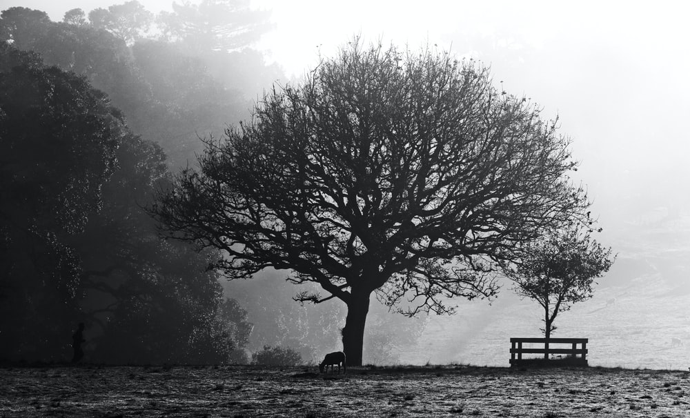 grayscale photo of person sitting on bench near tree