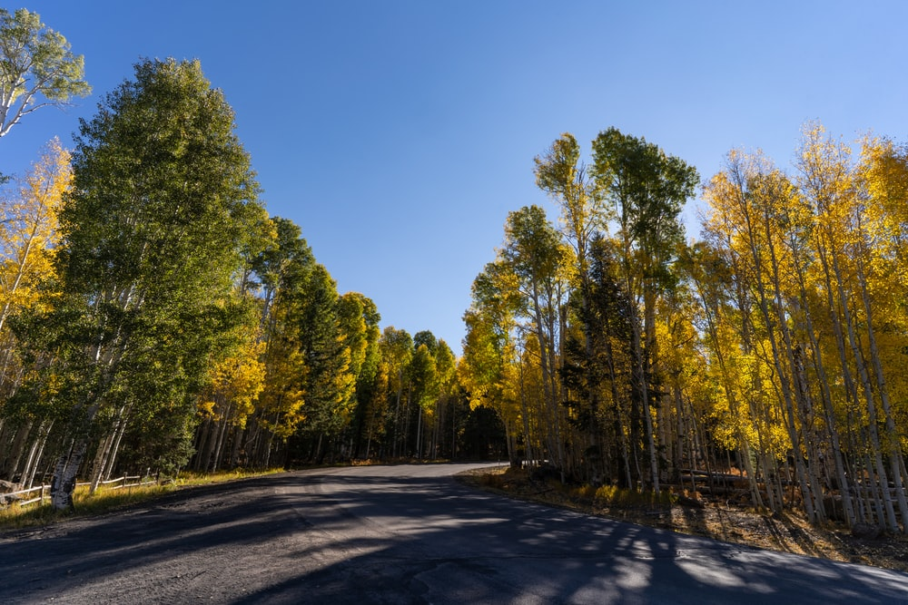 green trees beside gray road during daytime