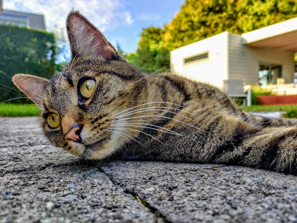 brown tabby cat lying on gray concrete floor