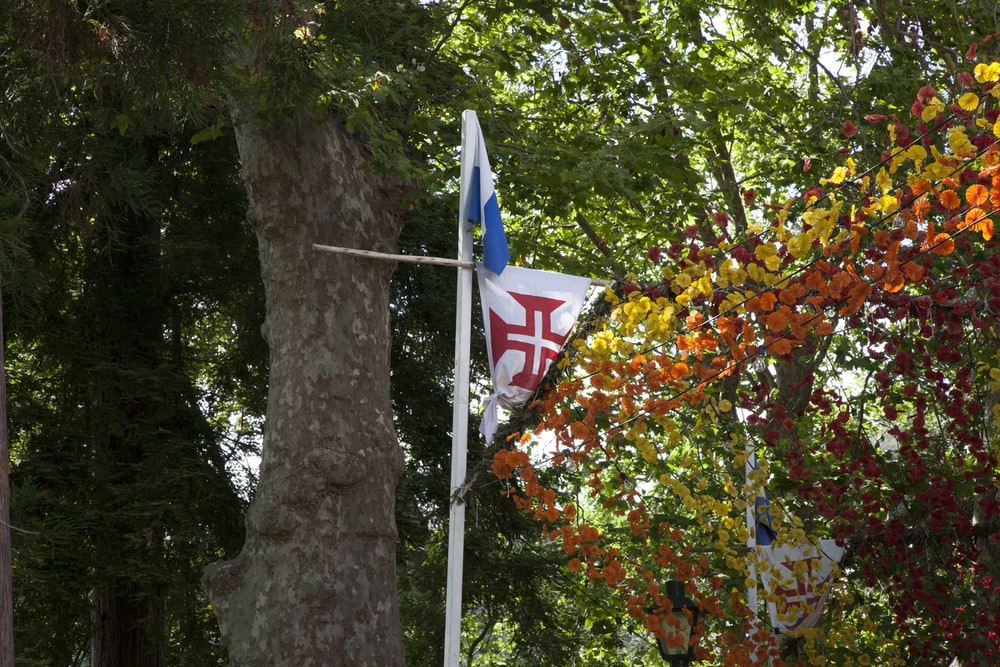 blue white and red flag on tree