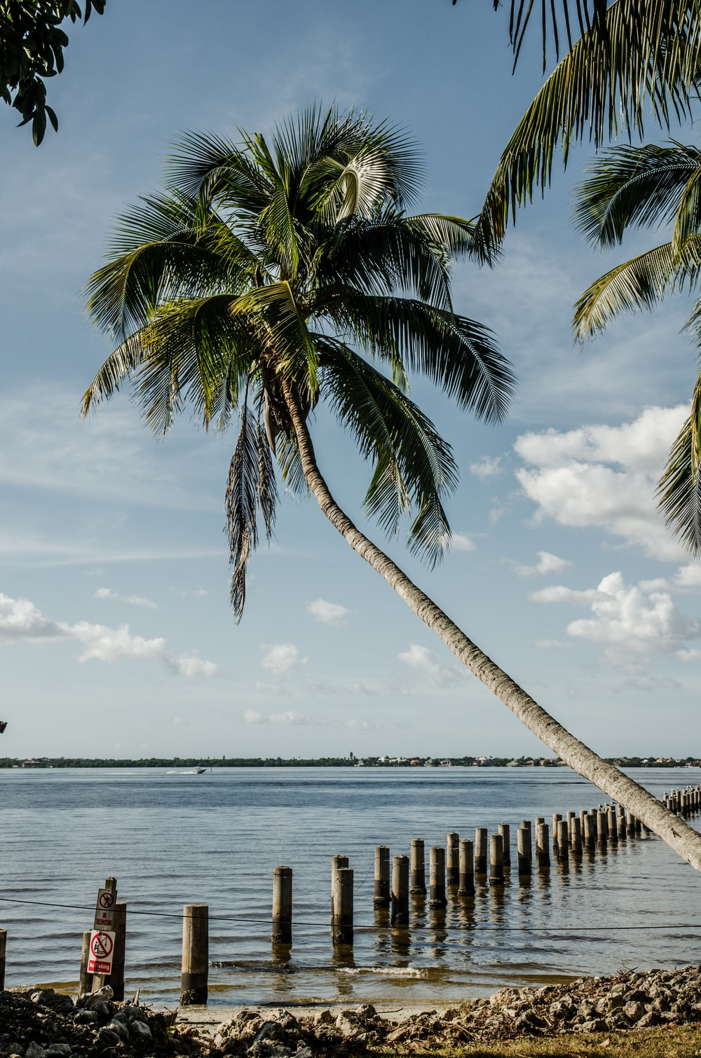 coconut tree near sea during daytime