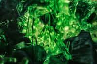 Green green stories