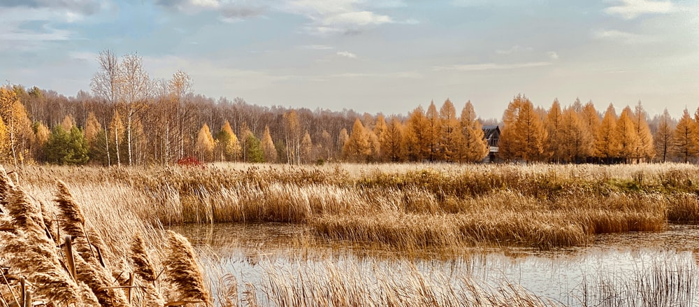 brown grass field near body of water during daytime