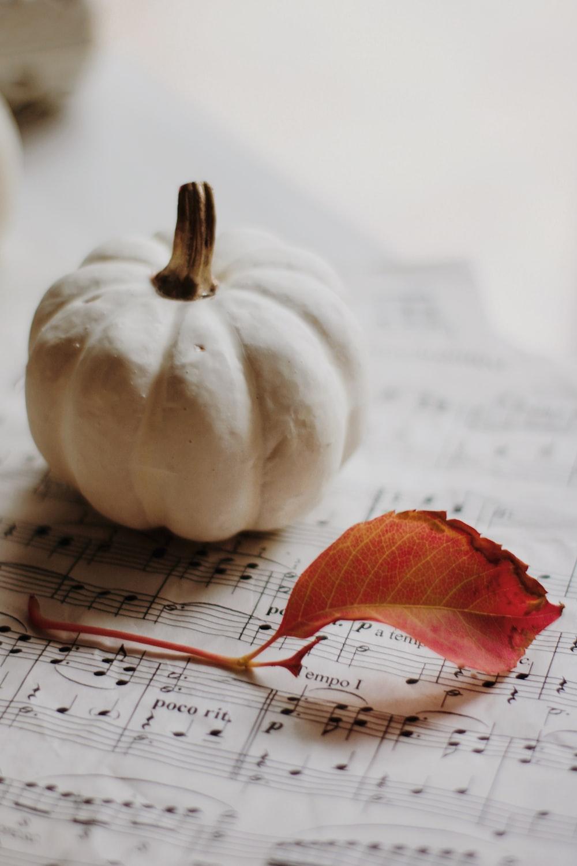 white pumpkin on white paper